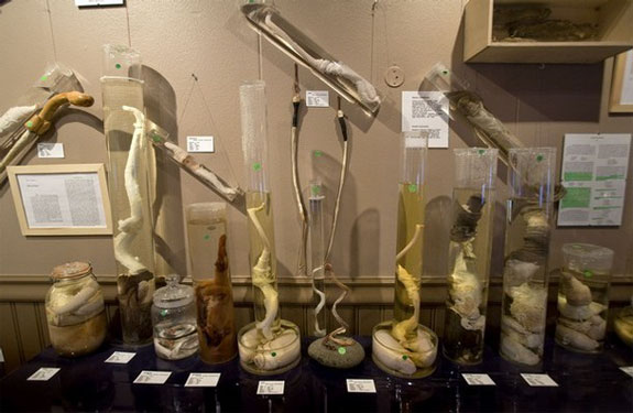 iceland phallus museum 3 The Icelandic Phallological Museum