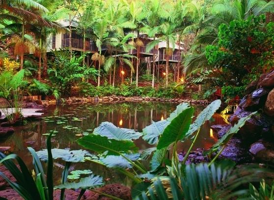 dain5 Luxury and Aborigines in the Australian Jungle