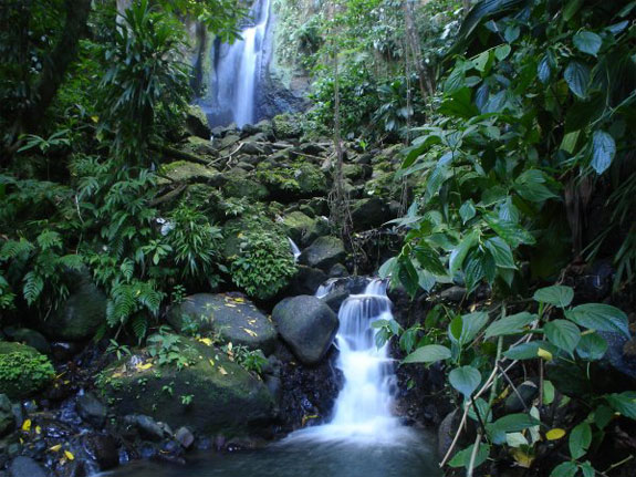 eco Spend a Night as a Jungle Castaway in Dominica