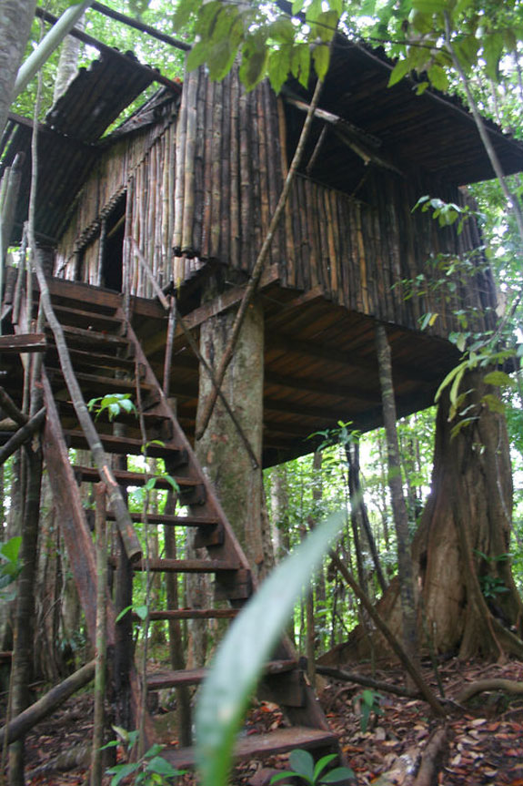 ecotree1 Spend a Night as a Jungle Castaway in Dominica