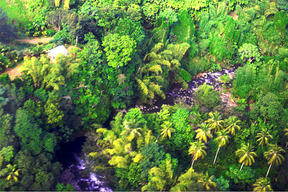 ecotree2 Spend a Night as a Jungle Castaway in Dominica
