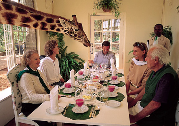 gm1 Eat Breakfast with a Giraffe