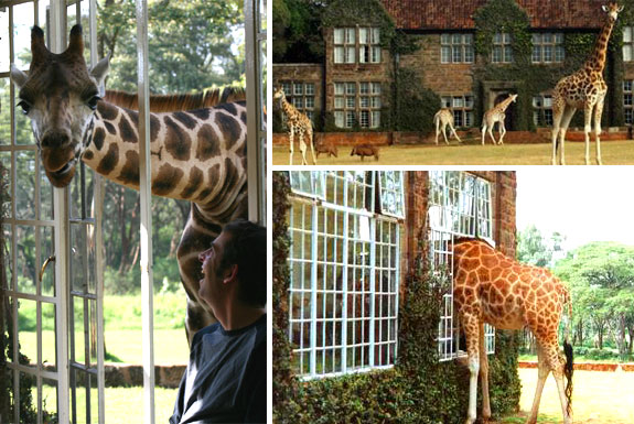 Eat Breakfast with a Giraffe
