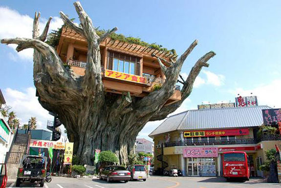 The Restaurant That's In A Tree, Of Sorts