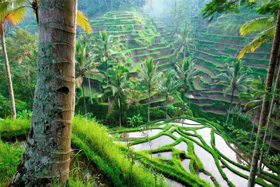 World's Best Rice Terraces: Bali