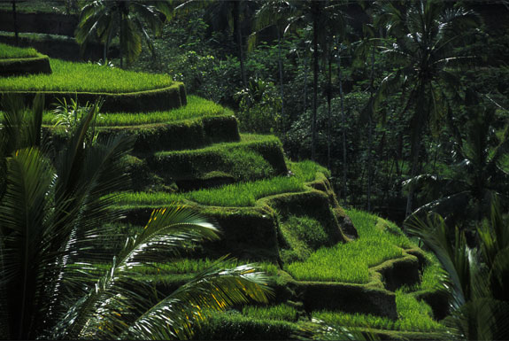 bali2 Top 10 Destinations <br>For Rice Terrace Travel