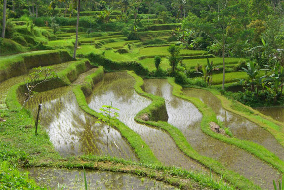 bali31 Top 10 Destinations <br>For Rice Terrace Travel