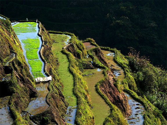 ban5 Top 10 Destinations <br>For Rice Terrace Travel