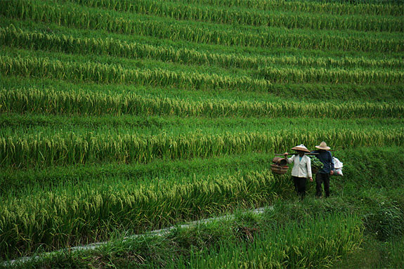 Terraces china for What does terrace farming mean