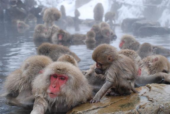 monkey3 Monkey See, Monkey Spa
