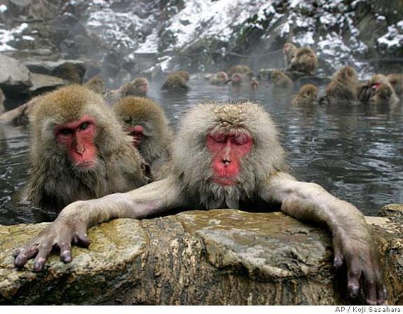 monkey5 Monkey See, Monkey Spa