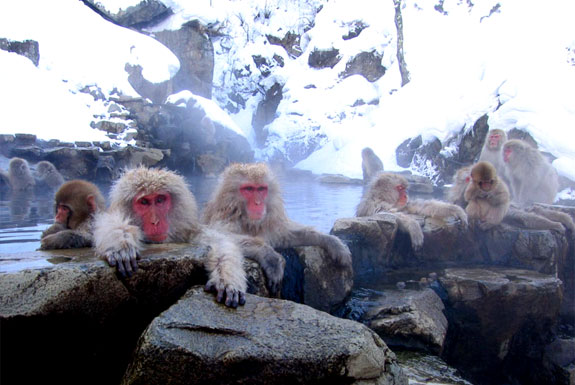 Monkey See, Monkey Spa