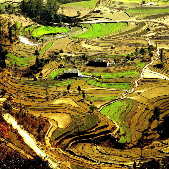nepal1 Top 10 Destinations <br>For Rice Terrace Travel
