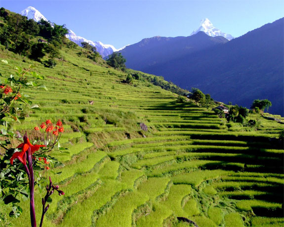 nepal2 Top 10 Destinations <br>For Rice Terrace Travel