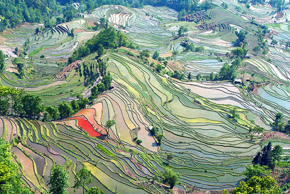 ricem Top 10 Destinations <br>For Rice Terrace Travel