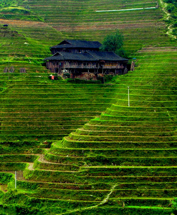 World's Best Rice Terraces: China