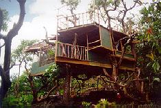 treetops Hawaiis Treehouse Hideaway