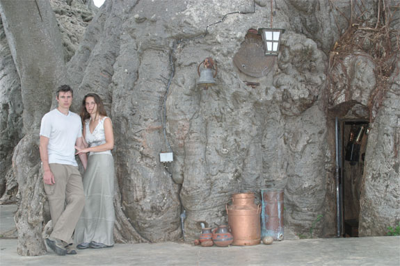 baobab bar 3 The Worlds Only Pub <br>Thats Inside a Tree