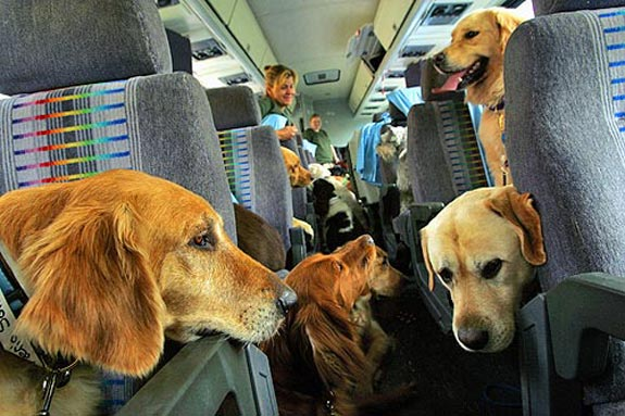 dog travel 2 The Airline for the Pet Setting Crowd