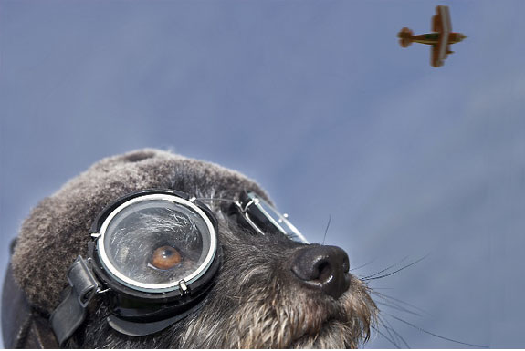 The Airline for the Pet-Setting Crowd