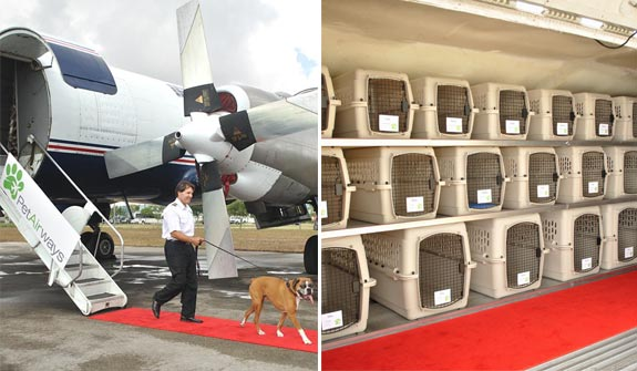 pet airways The Airline for the Pet Setting Crowd