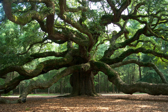 angel oak One Fish, Two Fish, <br>Places That Look Dr. Seuss ish