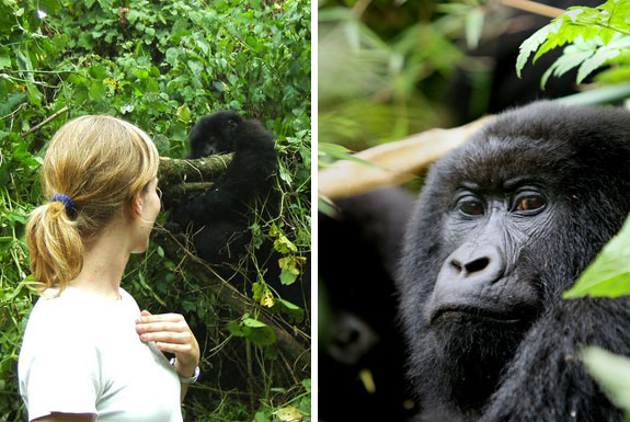 gorilla 4 Lose Weight While Traveling: <br>Three Fun & Cool Trips