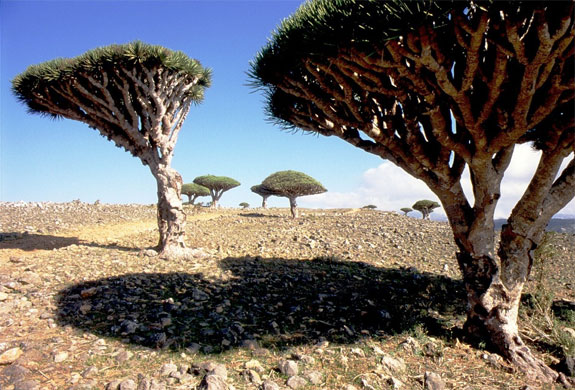 socotra 1 One Fish, Two Fish, <br>Places That Look Dr. Seuss ish