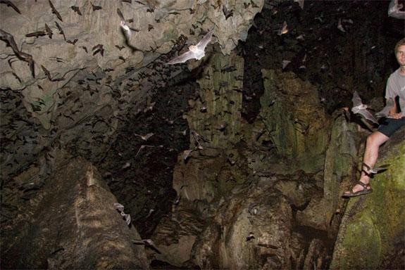 bat cave 2 The Guatemala Bat Cave