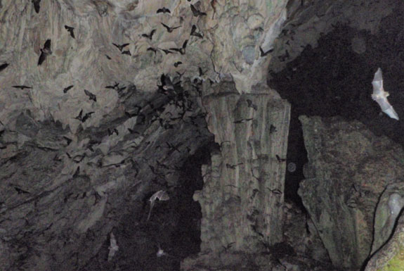 The Guatemala Bat Cave