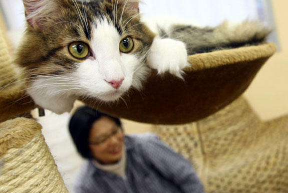 The Cat Cafes of Tokyo