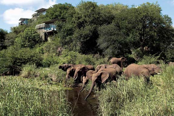 lebombo 1 7 Amazing & Luxurious <br>South Africa Safari Lodges