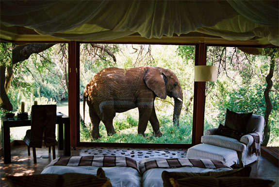 7 Amazing &#038; Luxurious <br />South Africa Safari Lodges