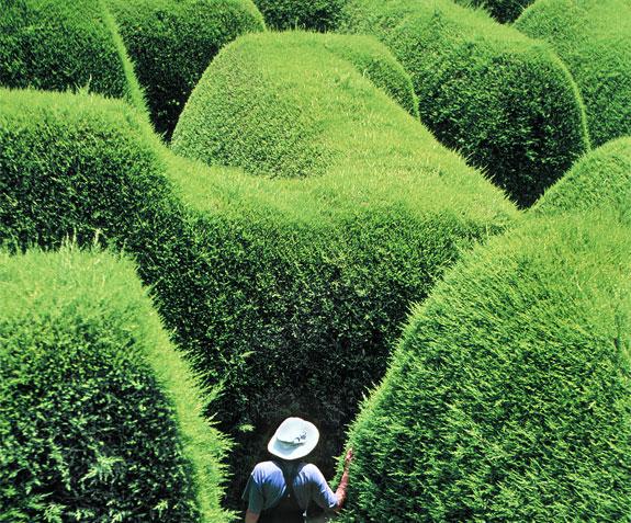 ashcombe maze 2 A Maze Ing