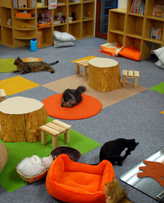 neko jalala 1 The Cat Cafes of Tokyo