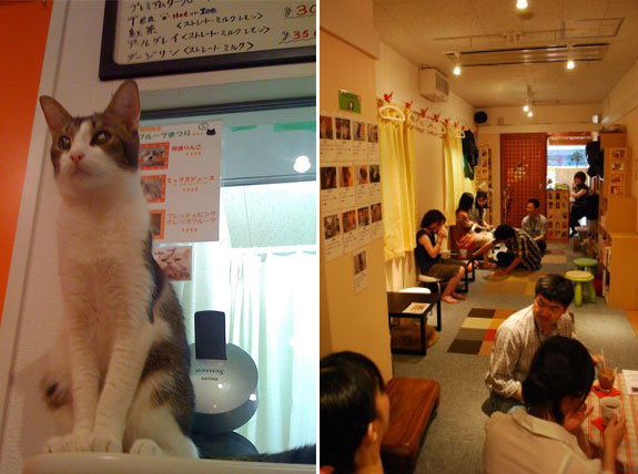 neko jalala 2 The Cat Cafes of Tokyo