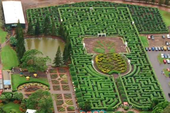 pineapple maze A Maze Ing