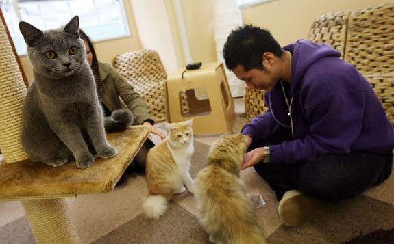 tokyo cat nekorobi 1 The Cat Cafes of Tokyo