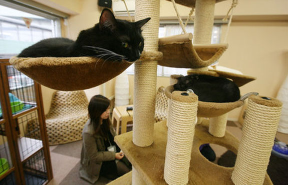 tokyo cat nekorobi 2 The Cat Cafes of Tokyo