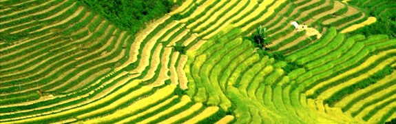 rice terrace travel Best Spot Cool Stuff Travel Posts of 2009