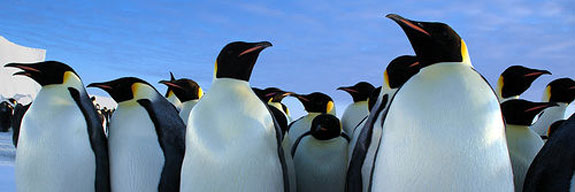 penguins See, Swim With Penguins <br>(Not in Antarctica)