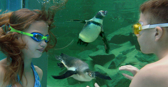 spreewelten penguin swim See, Swim With Penguins <br>(Not in Antarctica)