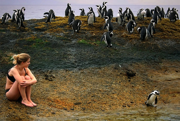 See, Swim With Penguins <br />(Not in Antarctica)