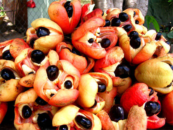 ackee jamaica 5 Delicious Foods <br>(That Can Kill You)