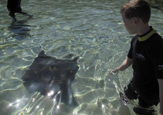dicovery cove orlando 5 Discovery Cove: Orlandos Un Theme Park