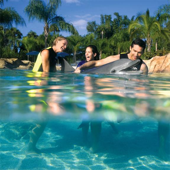 dicovery cove orlando 7 Discovery Cove: Orlandos Un Theme Park