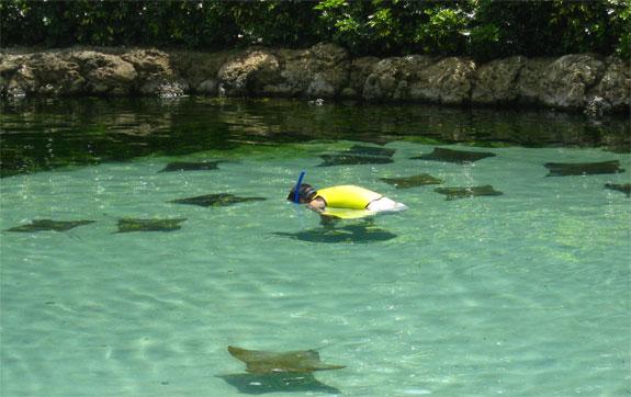 dicovery cove orlando 8 Discovery Cove: Orlandos Un Theme Park