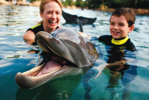 Discovery Cove: Orlando's Un-Theme Park