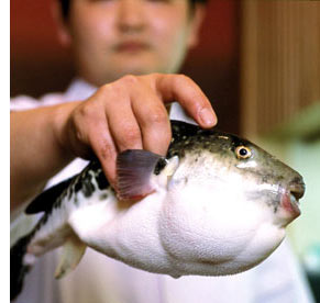 gourmet adventure japan s 5 Delicious Foods <br>(That Can Kill You)