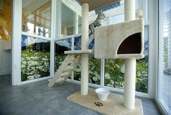 longcroft cat hotel 2 The All Suite, All Cat Hotel